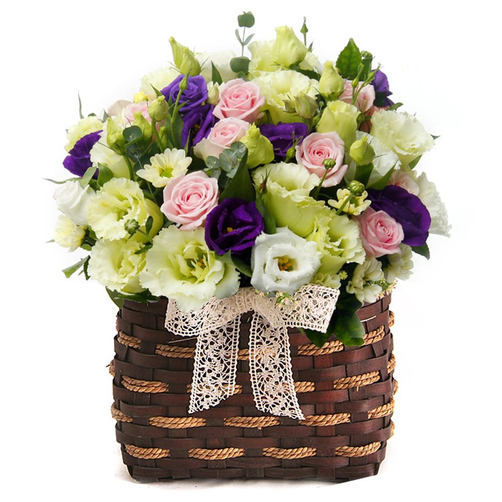 basket flower in Korea
