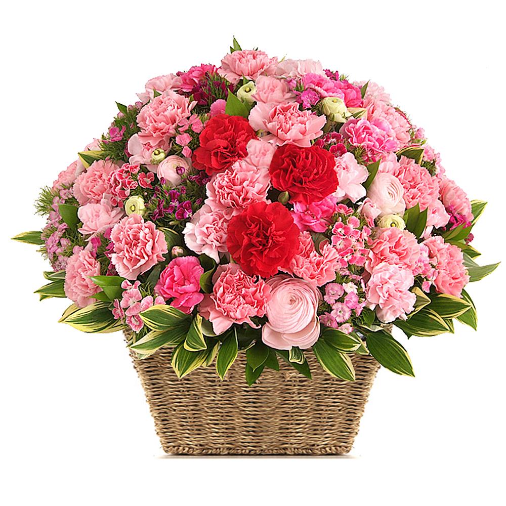 basket flower in Seoul