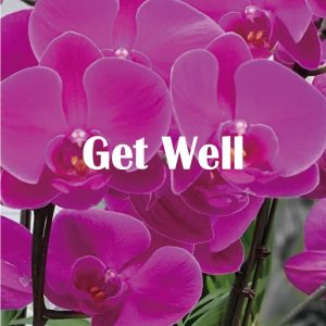 Get well flower Korea