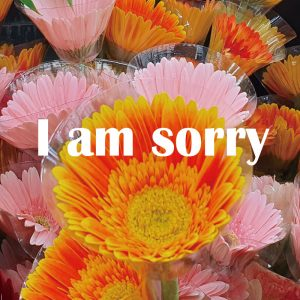 sorry flower Korea