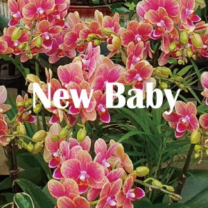 New baby flower Korea