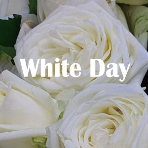 White day flower Korea